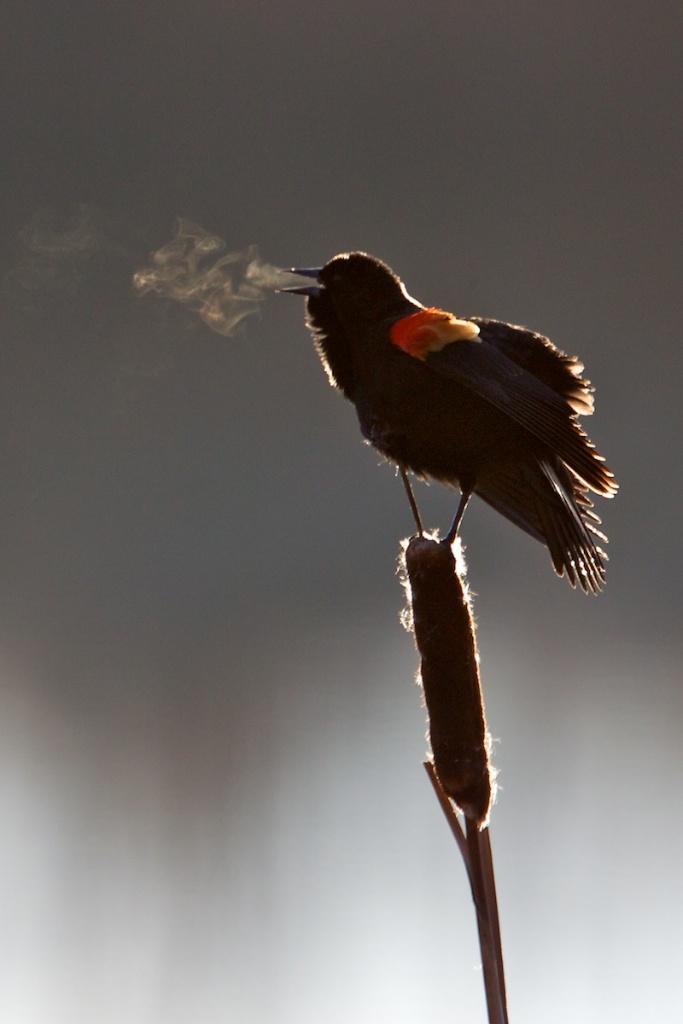CunliffeS - Blackbird%2527s%2Bbreath.jpg
