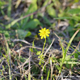 2013 Spring Flora & Fauna - IMGP6400.JPG