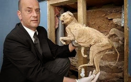 400 Year Old Cat Mummies Found Embedded In The Wall Of The House