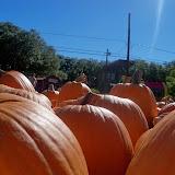 Pumpkin Patch 2014 - 116_4392.JPG