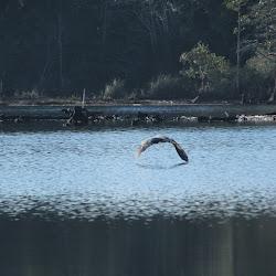 Fowl Marsh in Boat Feb 3 2013 57