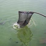 20150827_Fishing_Basiv_Kut_012.jpg