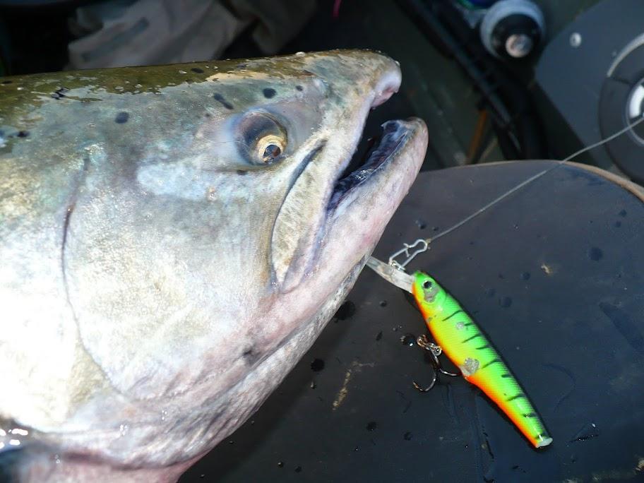 Pere Marquette River King Salmon Fishing