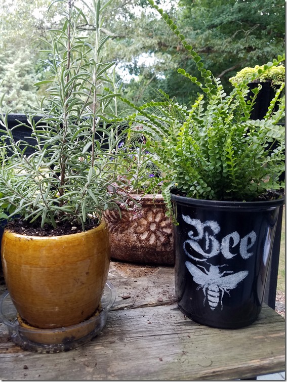 Bee Pot with Button Fern