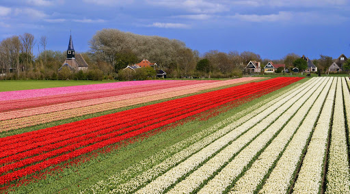 Mei 2015:  Bollenvelden in Noord- Holland