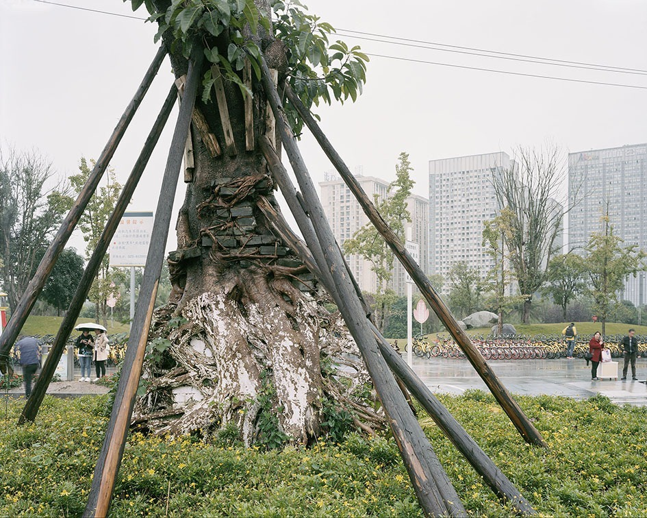 transplanting-trees-china-preston-10