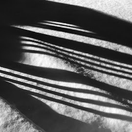 Snow Fence by Mike DeLong - Abstract Patterns ( fence, b&w, cold, shadow, snow,  )