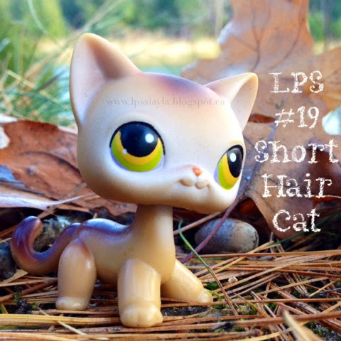 Littlest pet shop number 19