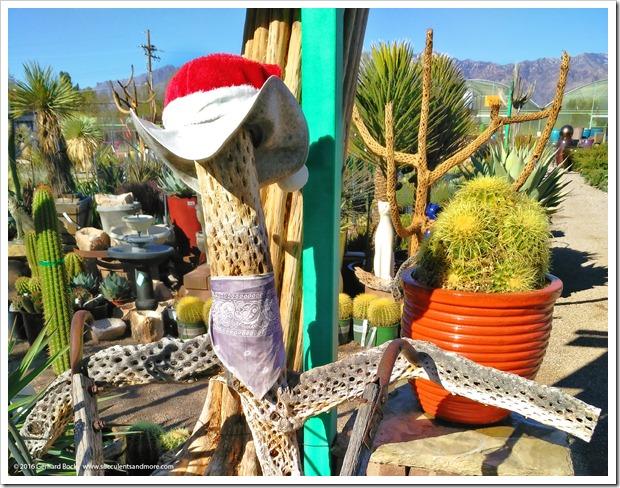 151230_Tucson_Mesquite-Valley-Growers_0060