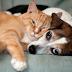 Ibram abre inscrições gratuitas para castração de cães e gatos no DF