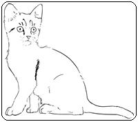 คำศัพท์ภาษาอังกฤษแมว