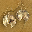 Earrings - CE%2B932%2BSaw%2Ba%2BSea%2BShell%2B%25282000x1483%2529.jpg
