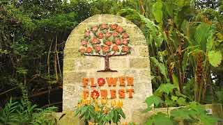 forest flower barbados
