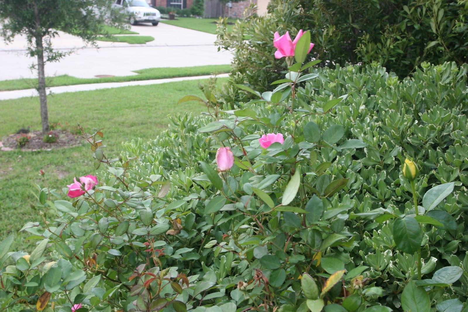 Gardening 2012 - IMG_3359.JPG