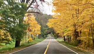 Blacktop road flanked by yellow leaf trees displaying fall colors