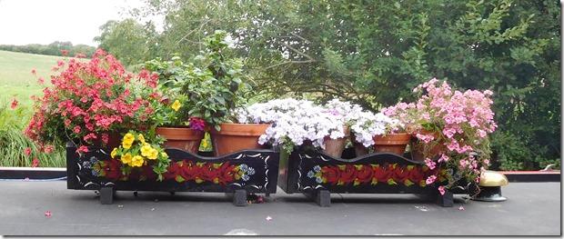 3 juggler's flowers