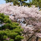 2014 Japan - Dag 10 - tom-SAM_0577-0025.JPG
