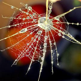 by Biljana Nikolic - Nature Up Close Other Natural Objects