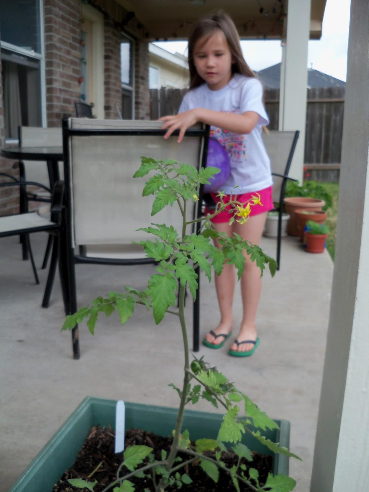 Gardening 2011 - 100_7042.JPG