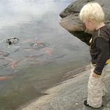 Mating av Gullfisk.