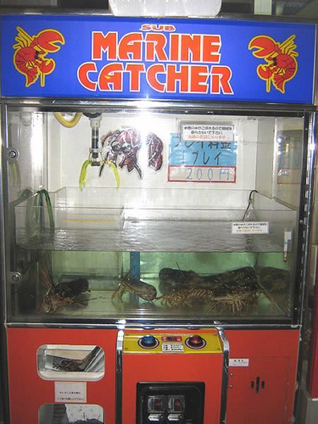 Extraordinary Items Sold In Vending Machines Seen On www.coolpicturegallery.us