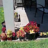 Gardening 2010, Part Three - 101_4479.JPG