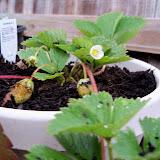 Gardening 2010 - 101_1213.JPG