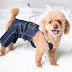 How to Make Your Own Simple Pet Clothing