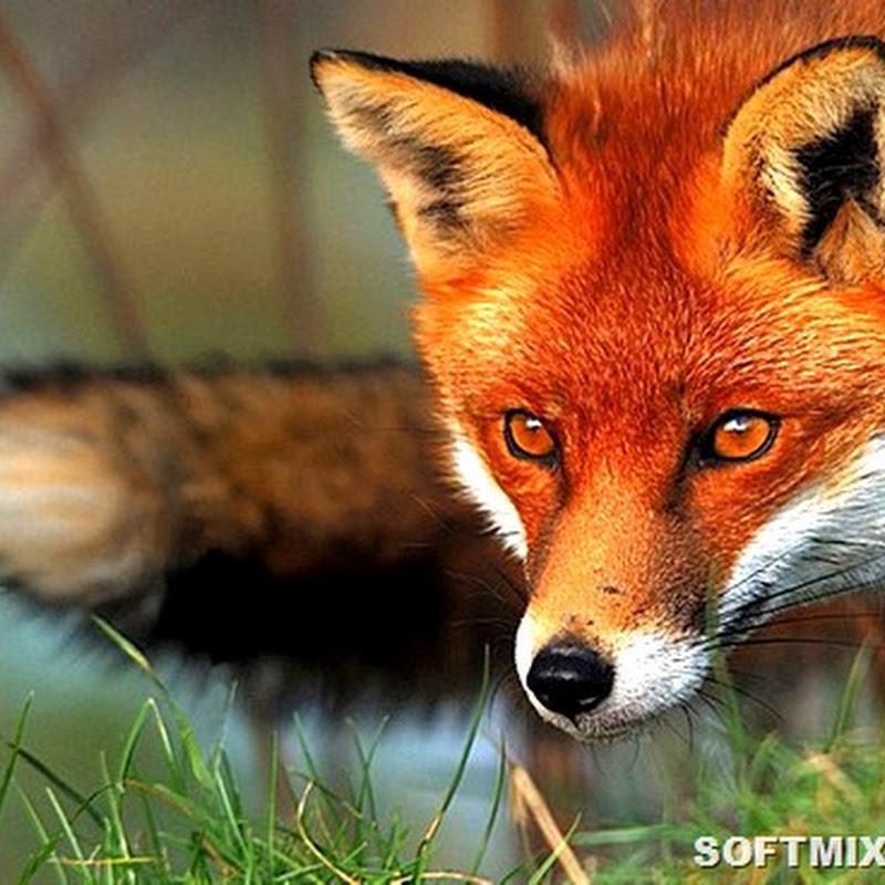 Десять ошибочных стереотипов о животных
