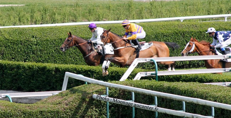 Photos Auteuil le 04-05-2014 IMG_0879