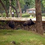 chattbir zoo ostrich.jpg