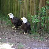 04-07-12 Homosassa Springs State Park - IMGP4577.JPG