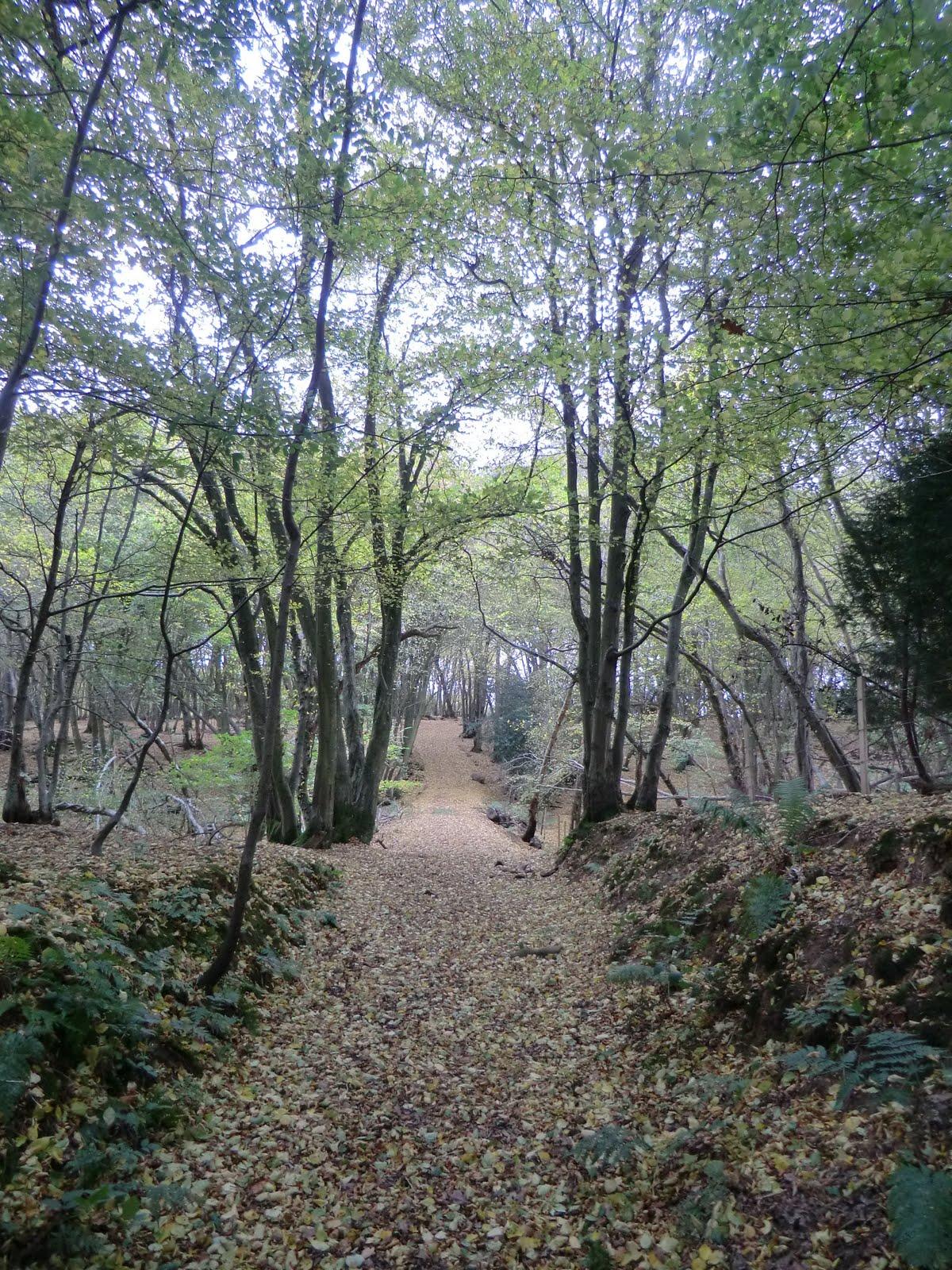 CIMG4753 Woodland path near Freshfield Bridges