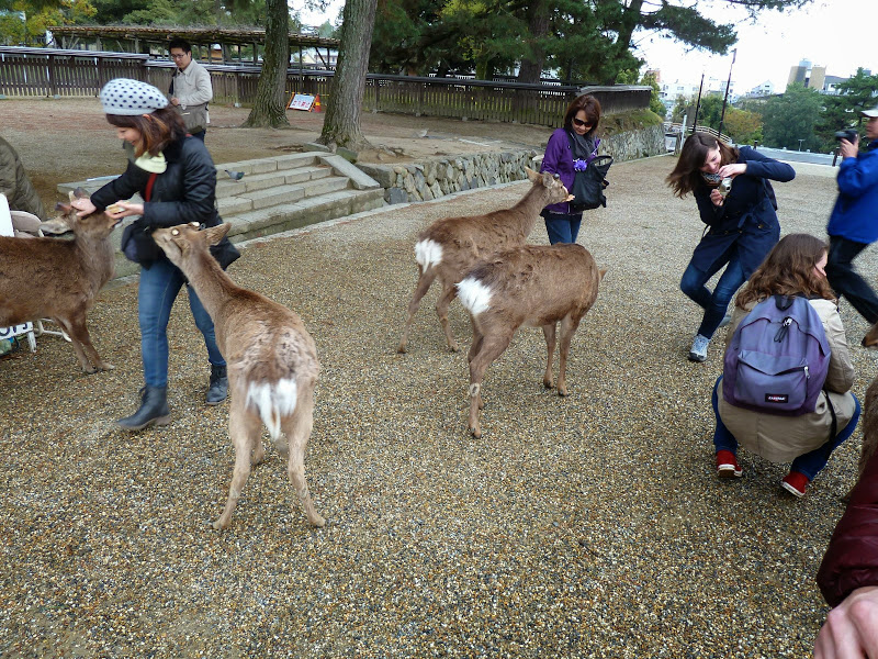 2014 Japan - Dag 8 - mike-P1050687-0222.JPG