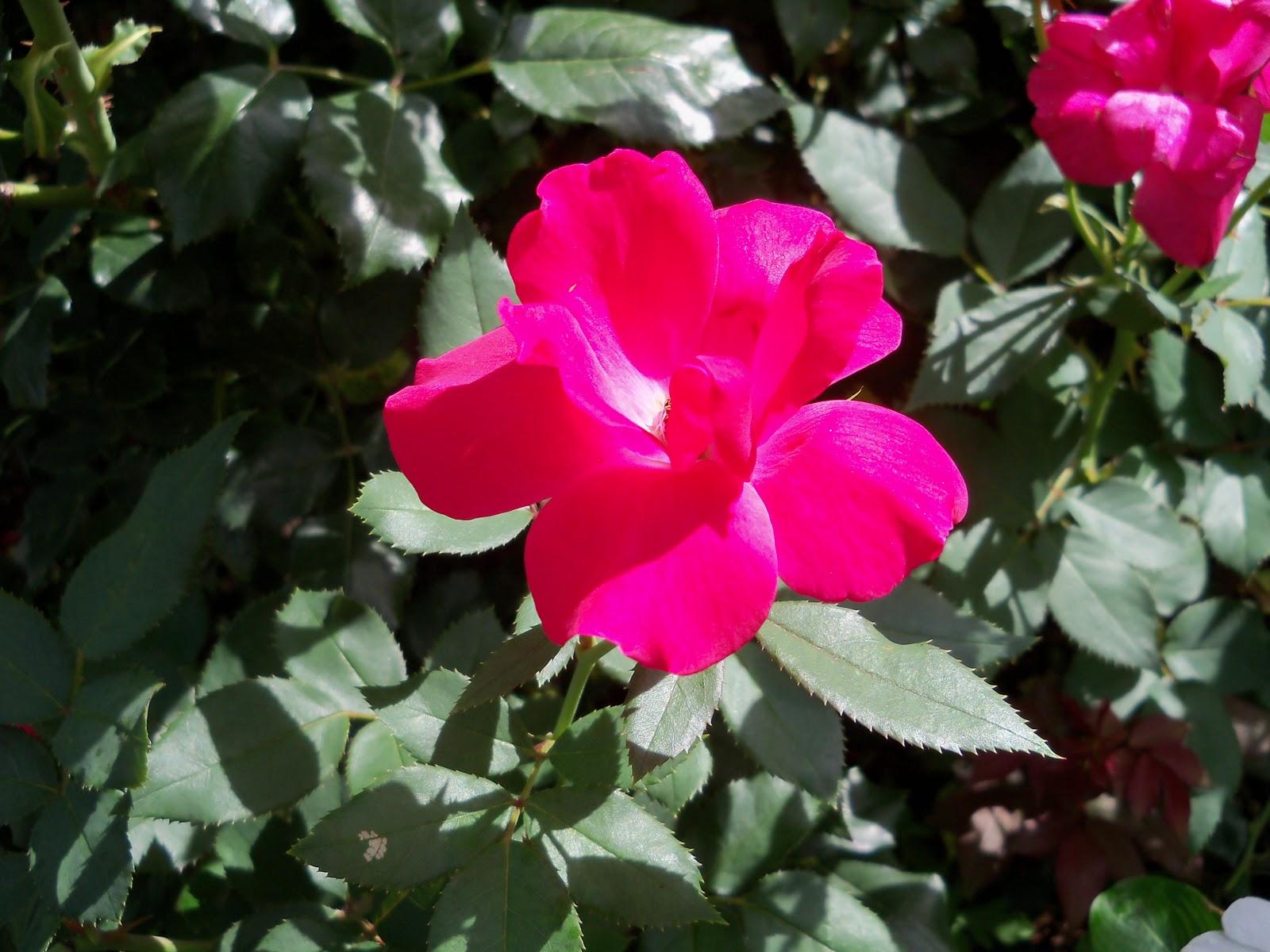 Gardening 2010, Part Three - 101_3812.JPG