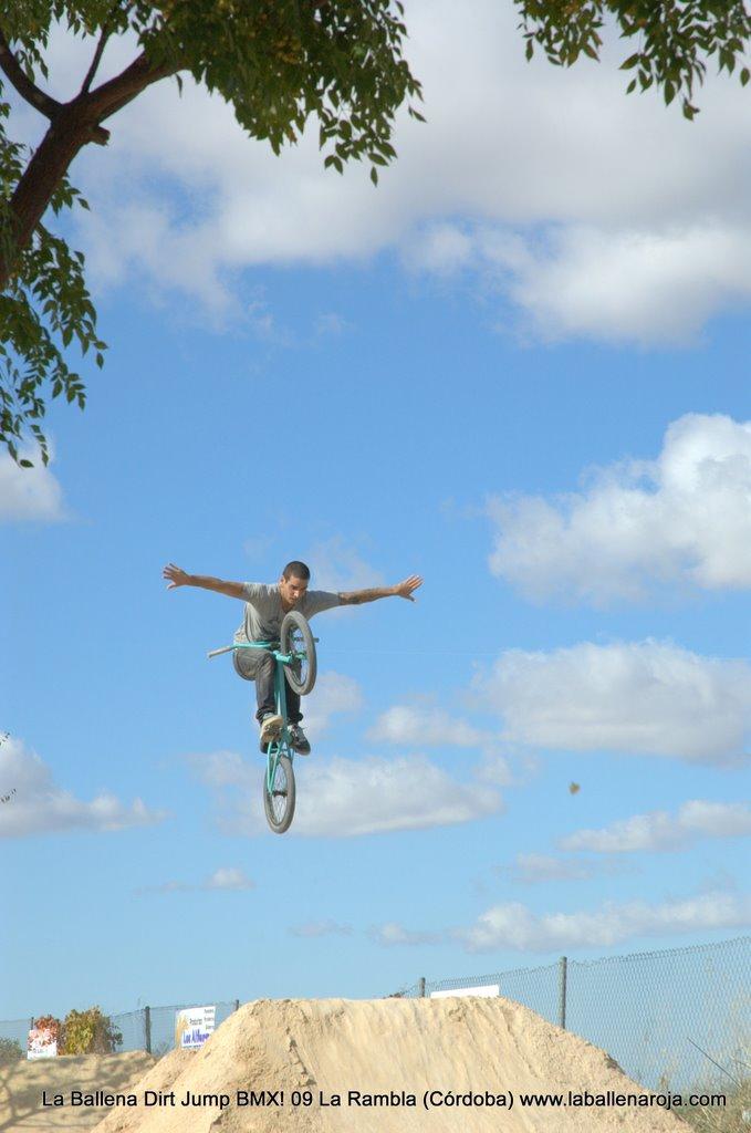 Ballena Dirt Jump BMX 2009 - BMX_09_0010.jpg