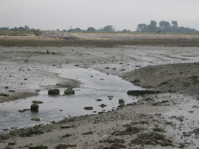 muddy creek at low tide