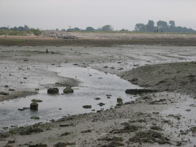 muddy creek at low tide