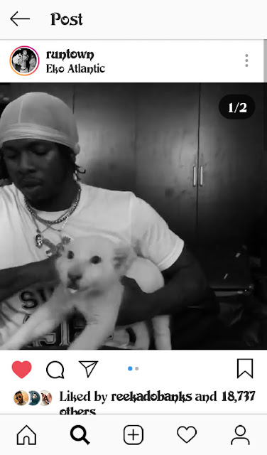 Runtown Buys A White Lion As Pet (Pictures)