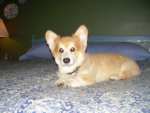 The Daily Corgi: Faces of DM: Llyr
