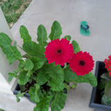 Gardening 2010 - 101_1112.JPG
