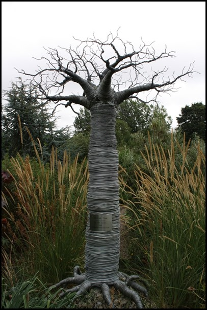Baobab tree at Lullingstone Castle World Garden