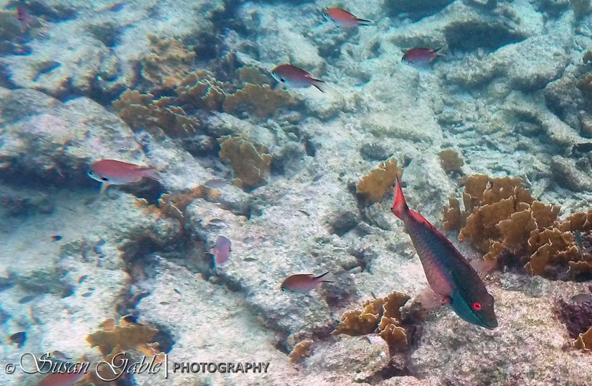 Bonaire GOPR0546