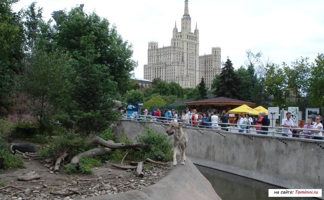 Волки в Москве