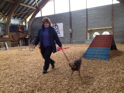 Border Terrier Charly lernt mit Frauchen den Agility-Parcours kennen.