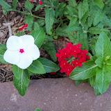Gardening 2010, Part Two - 101_2889.JPG
