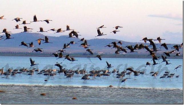 la-laguna-de-gallocanta-700x400
