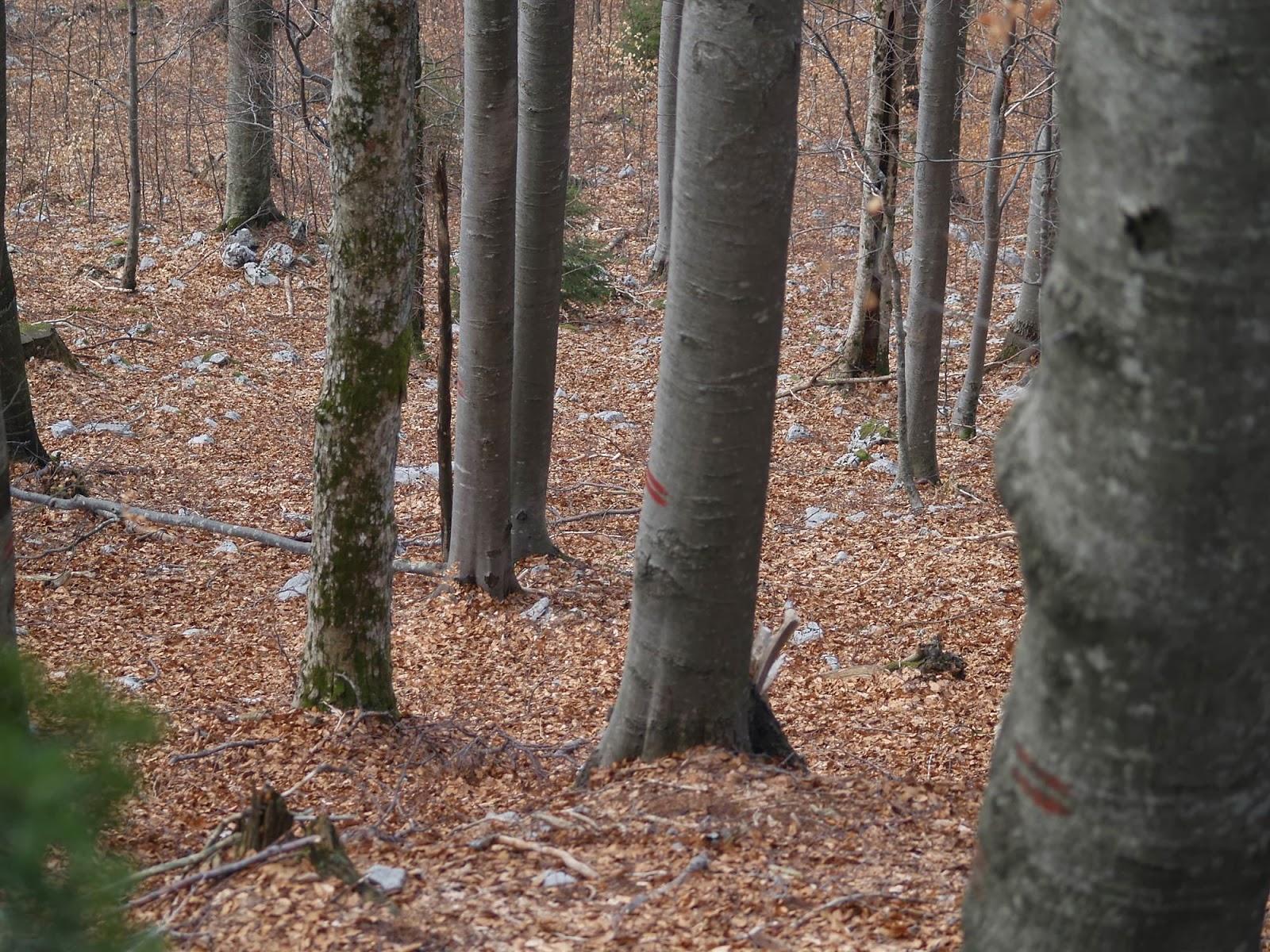 Orientacijski vikend, Črni dol 2007 - P0176124.JPG