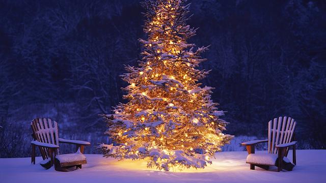 Real Christmas Tree Images