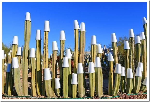 151230_Tucson_Tohono-Chul-Park_0015